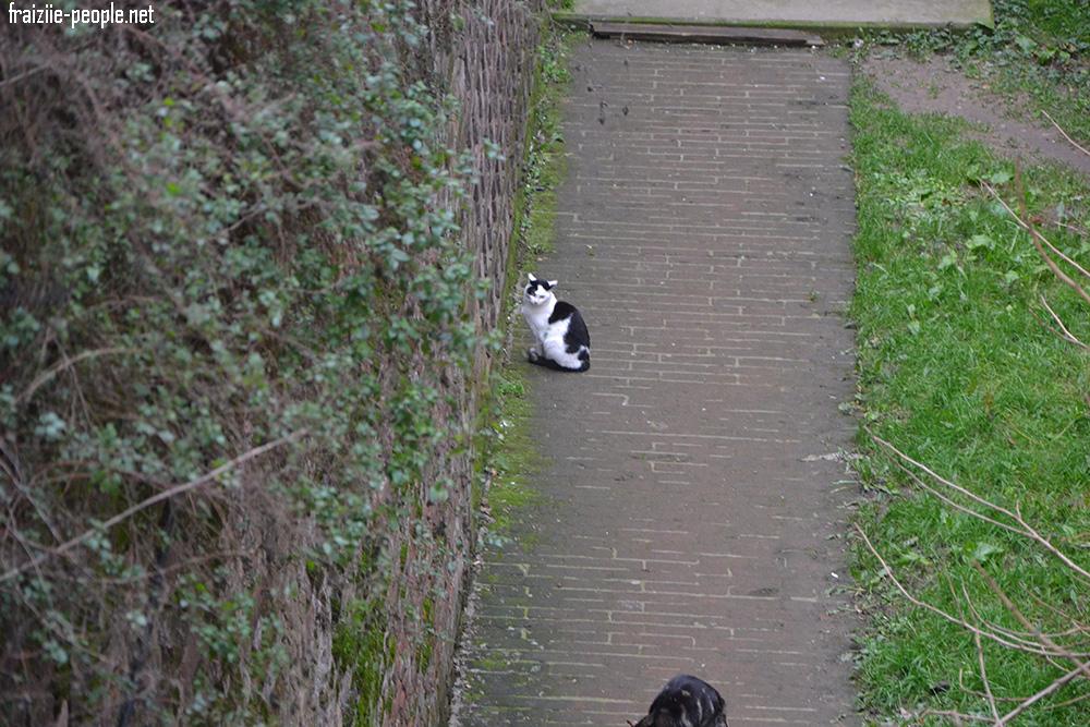 Au fil de la visite on découvre que les douves du château accueillent des chats ! Et oui tout autour du château se baladent plusieurs chats sauvages :)