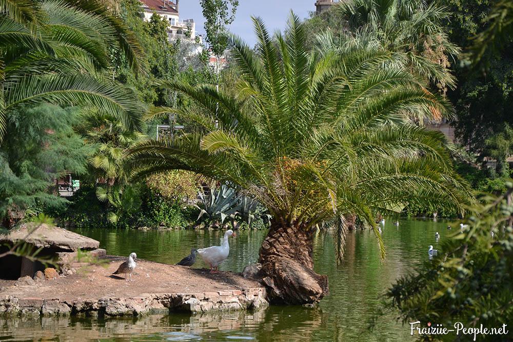Ce qui m'a poussé cette année à visiter Barcelone plus que les autres années, est une une photo de la blogeuse Madison Ramaget devant la fontaine du parc de la Ciutadella qui je ne connaisait pas. Ce parc est à côté du zoo de Barcelone et complètement gratuit et ouvert à tous, même aux chiens, ce qui est rare en Espagne. Il y a quelques similaritudes avec notre bois de Boulogne national, ormi qui les arbes sont tous remplacés par des palmiers (ce qui n'est pas pour me déplaire).