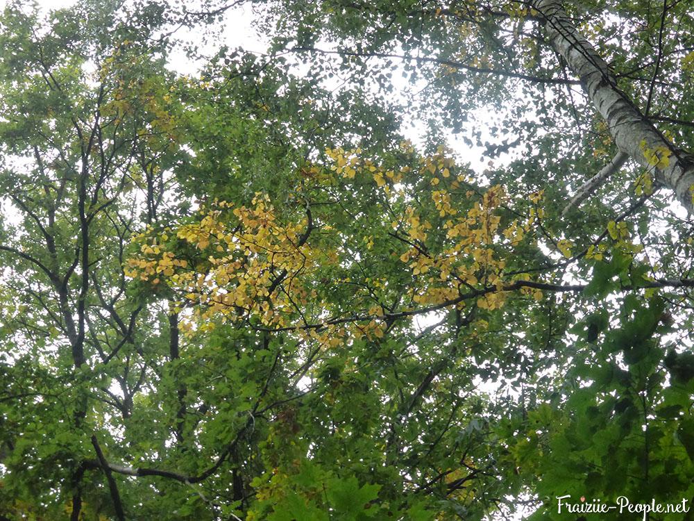 1 petite promenade automnale dans les bois