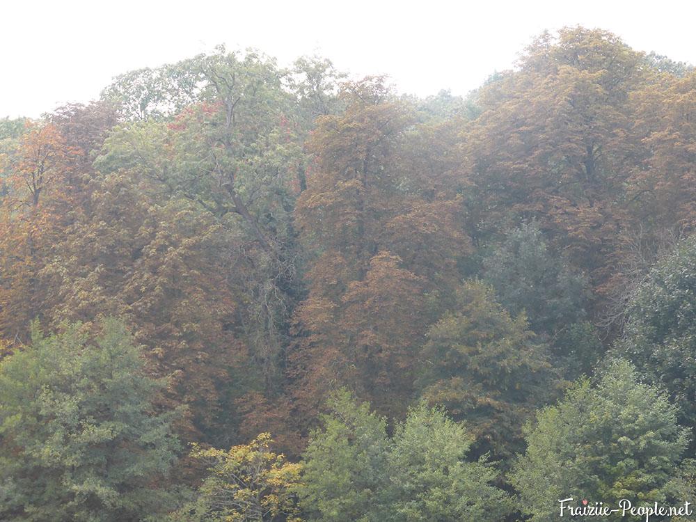 12 petite promenade automnale dans les bois