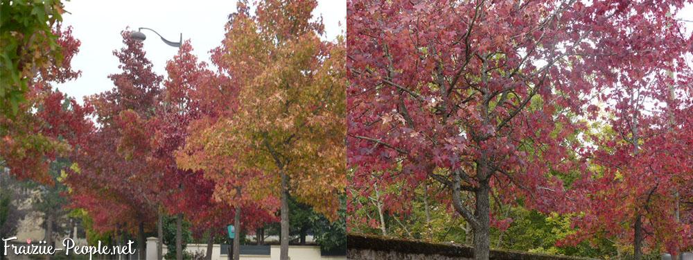 Je termine cet article avec les plus belles couleurs d'automne, entre le rouge et le rose, c'est juste magnifique :)