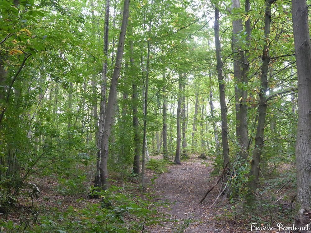 2 petite promenade automnale dans les bois