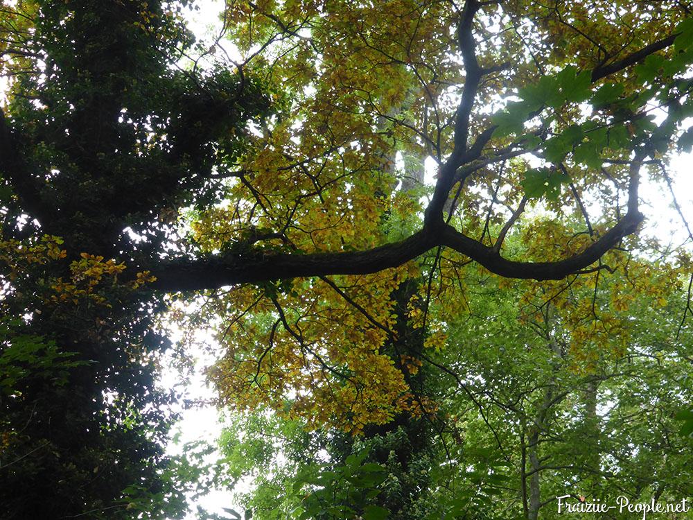 3 petite promenade automnale dans les bois