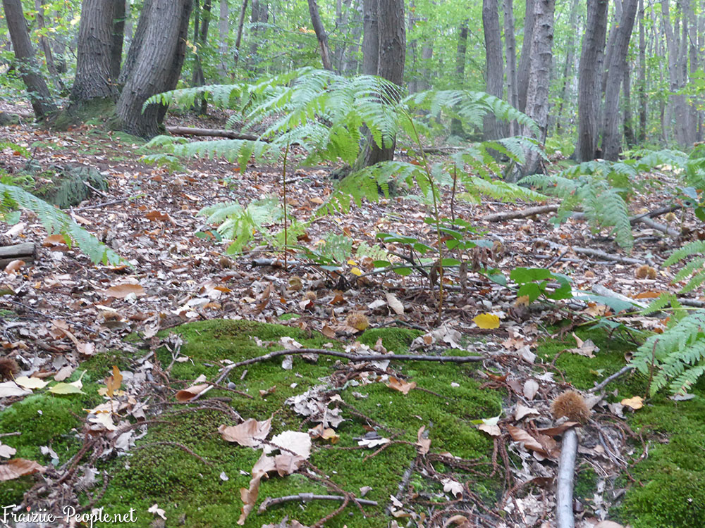 4 petite promenade automnale dans les bois